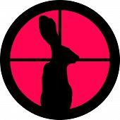In the Scope Series - Rabbit