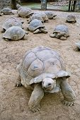 stock photo of the hare tortoise  - beautiful giant turtles at park of mauritius - JPG
