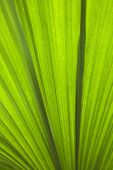 Close up of plant leaf detail, Daintree Rainforest, Australia.