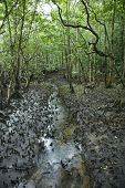 Small stream in Daintree Rainforest, Australia.