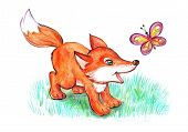 Little Fox Playing With Butterfly