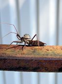 pic of kinda  - this beetle bug was crawling on my stair support outside - JPG