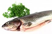 stock photo of brook trout  - a raw trout on a white background - JPG