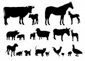 stock photo of horses ass  - A set of animal silhouettes on white - JPG