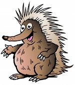 Hand-drawn Vector Illustration Of An Echidna