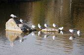 Gulls In The Rocks