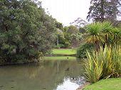Melbourne Botanic Gardens Lily Lake