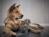 A Huge Dog And A Small Cat. Friendship Dogs And Cats poster
