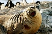 Elephant Seal & Penguins