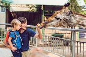 Father And Son Watching And Feeding Giraffe In Zoo. Happy Kid Having Fun With Animals Safari Park On poster