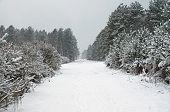 Walking In A Norfolk Forest Winter Wonderland poster