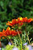 Orange Flowers Over Green