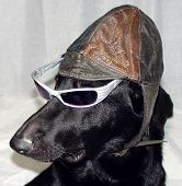 Funny Dog With Hat & Glasses