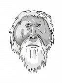 Retro Cartoon Style Drawing Of Head Of An Tapanuli Orang-utan Or Pongo Tapanuliensis , An Endangered poster