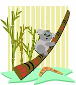 Koala Bear with a Didgeridoo and Boomerang