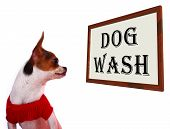 Dog Wash Sign Showing Canine Grooming Washing Or Shampoo poster