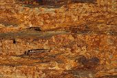 image of shale  - Background texture of earthy colored shale stone - JPG