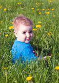 Child In Herb With Dandelion