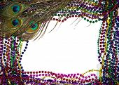 Mardi Gras Peacock Feathers
