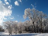 Snow Trail 2