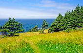 Green Coastal Meadow And Forest