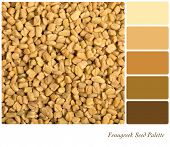 A colour palette with a background texture of fenugreek seeds with complimentary colour swatches.