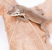 Molting Reptile on leaf, macro