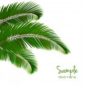 Background with palm leaves. Vector illustration