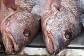 Red Snapper Fish Heads