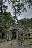 Tree On Top Of Angkor Wat Temple From Front