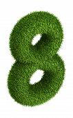 Natural grass number 8