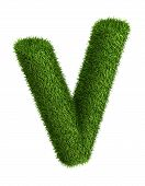 Natural grass letter V