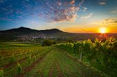 Vineyard with colorful sunrise
