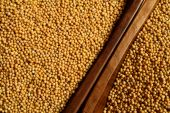 image of mustard seeds  - Food and cuisine - JPG