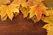 Yellow maple leaves on wooden background