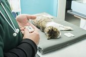 Veterinary Blood Test