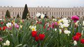 Versailles Gardens Flowers