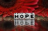 Hope Text With Red Flowers