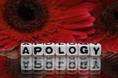 Apology Text Message With Red Flowers