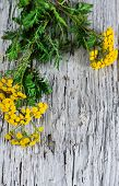 picture of tansy  - Yellow flowers of tansy on the wooden background