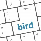 Button Keyboard Key, Keypad With Bird Word
