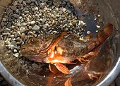 Fresh Scorpion-fish (scorpaenidae) Caught In A Bowl