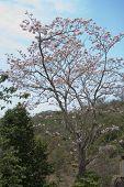 Árbol de flor rosa