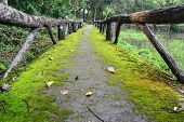 The lichen on the pathway