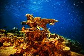 Majestic marine life, beautiful natural background, coral garden and many exotic fishes under transparent water, beauty of nature concept