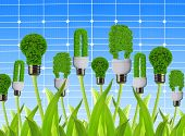 pic of photosynthesis  - eco energy bulbs on the background solar panel - JPG