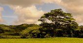 Beautiful Image of a Farmland in Kauai
