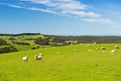 stock photo of spring lambs  - Sheep and lambs in the field at spring time under bright blue sky - JPG
