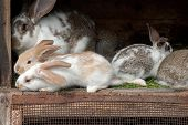 Mother rabbit with newborn bunnies