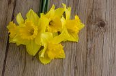 picture of jonquils  - Closeup of yellow jonquil flowers on wooden background - JPG
